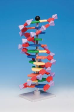 Molecular model system miniDNA® / RNA Kits