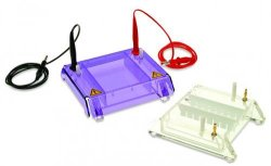 Gel electrophoresis tank MiniRapide