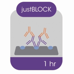 Blocking solution for Western blot