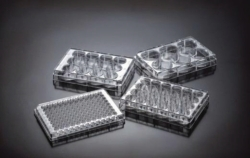 Cell Culture Plates, treated, PS, sterile